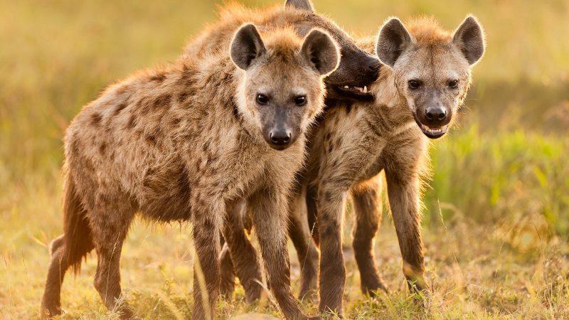 Wild Animals Cause Havoc In Mat North