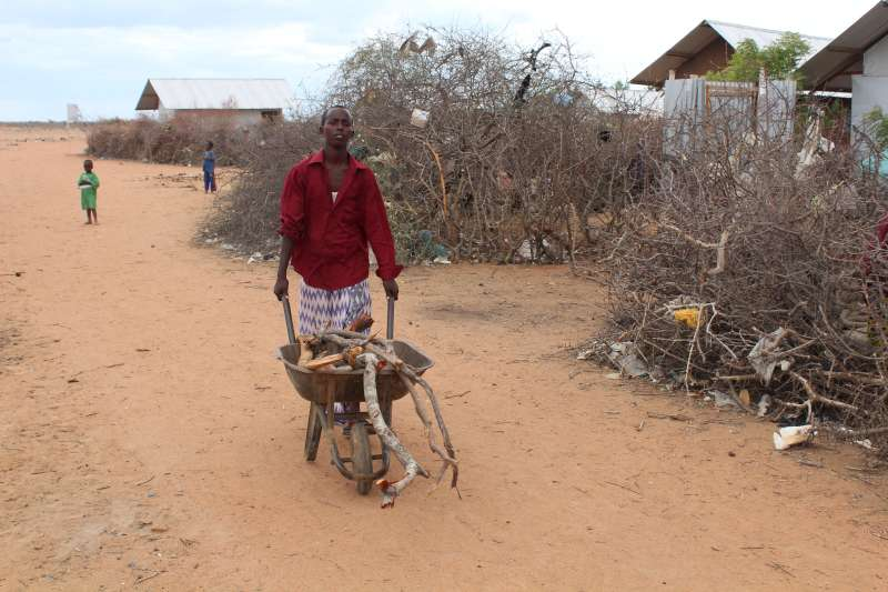 Why Zimbabwean Villagers Are Struggling With A False Scarcity Of Fuelwood