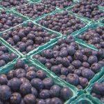 Nhimbe Fresh Struggles With Blueberry Exports To China
