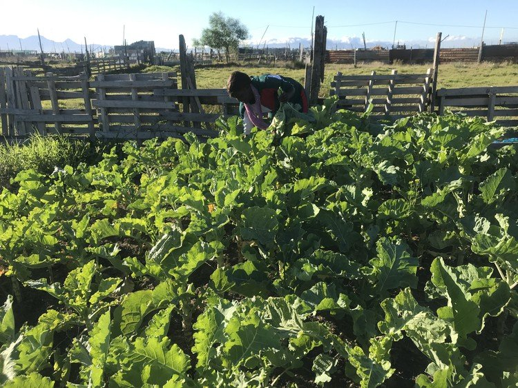 Cape Town Zim Mother Starts Farm After Losing Job During Lockdown
