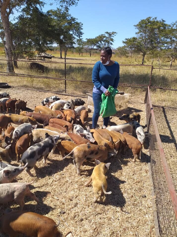 Kadoma Woman Empowered Through Pig Farming