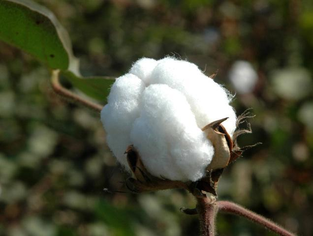 Cottco Loses 1.2mKG Of Cotton Lint In Fire