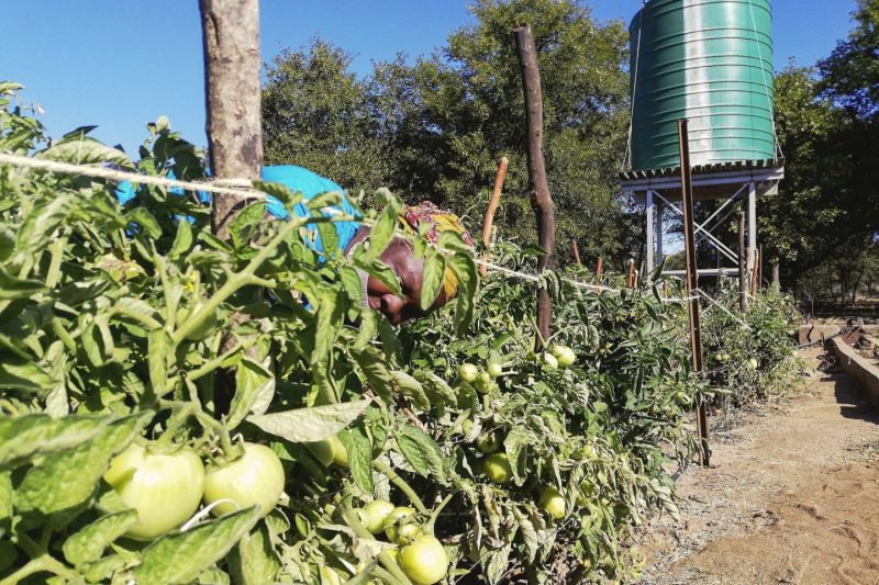 Renewable Energy Is Vital In Parched Rural Zimbabwe