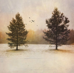 Two trees in a snow field with a forest in the background. A filter has been applied by distressed FX ageing the photo.