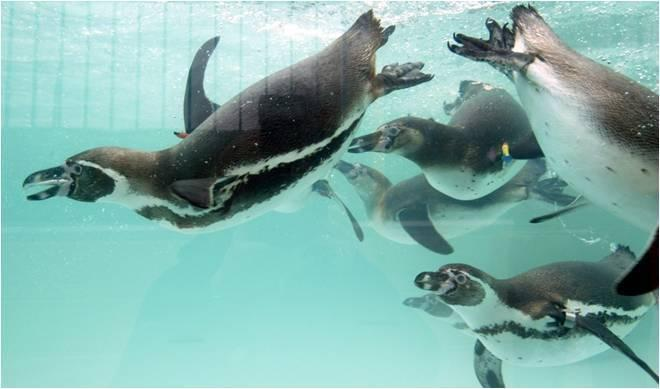 3 Reasons Why You Will Love the Penguins at Paultons