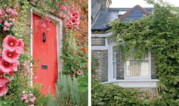 A repainted front door; Overgrown climbing plants