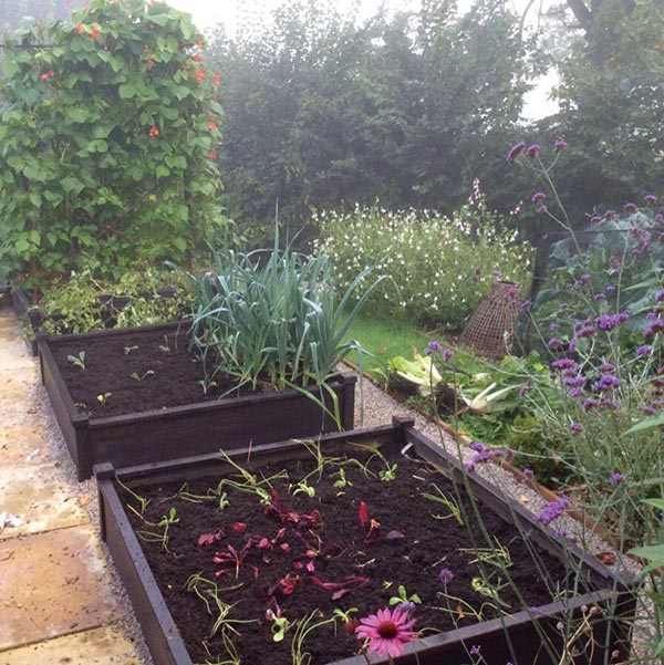for adding colour around plant boxes and raised bends inthe garden