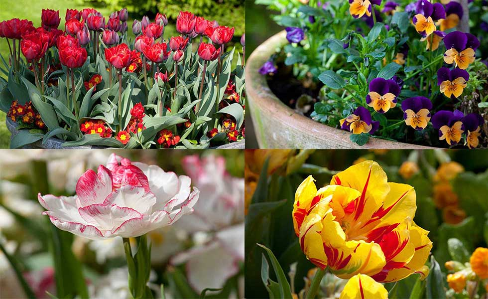 colourful flower image gardens