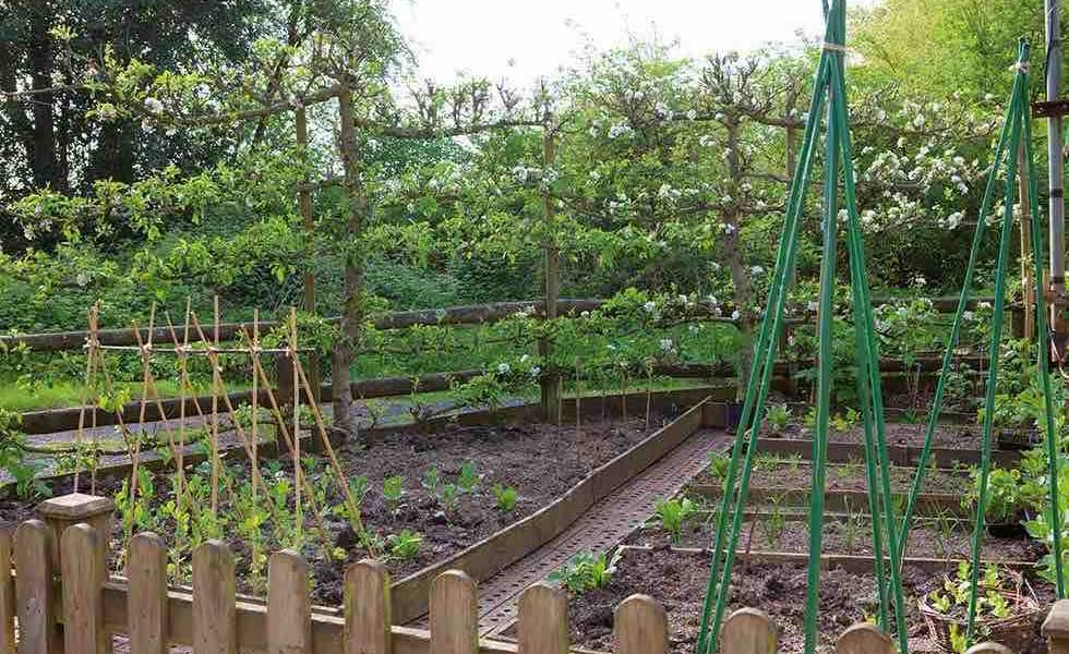 Raised beds with fruit trees and bean poles in kitchen gardens