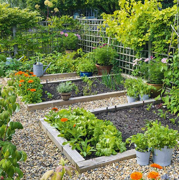 vegetable plots in a trellaced kitchen garden
