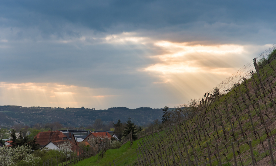 Wines from the Nahe