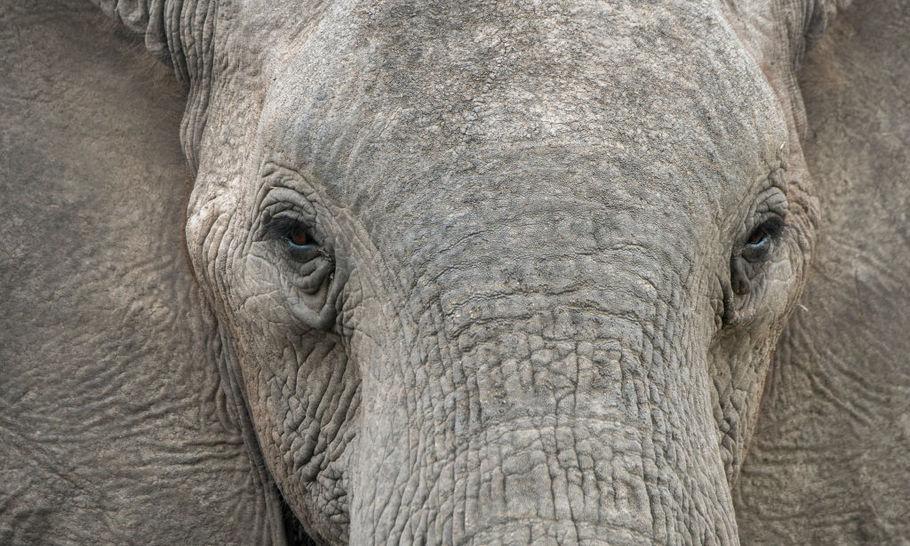 Does Zimbabwe need an elephant cull?