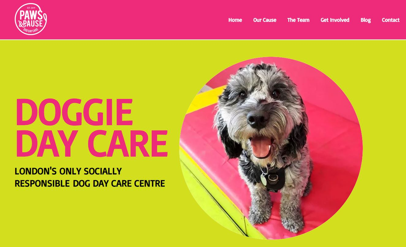 Paws for effect! How volunteer marketers used lockdown to change the world through a love of dogs News Post Image