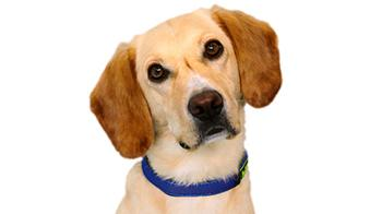 Why the RSPCA Doesnt Need to Beg for Gift Aid Hero Image