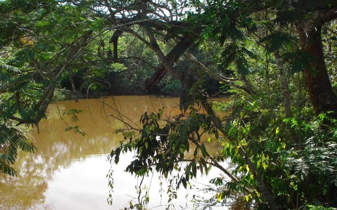 1ª Caçada de 2018: Alcateia do Agr. 1398 Nª Srª do Amparo-Portimão