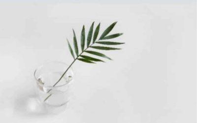 Ética do Cuidar na Pedagogia Inaciana