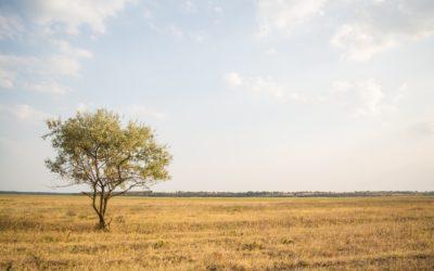 Uma pausa pela Terra