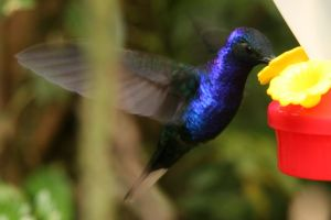 Will the long tail of Hummingbird affect our keyword campaigns?
