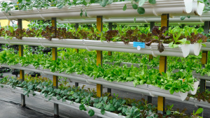 Environment-farming