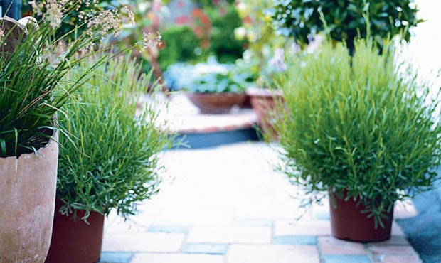 Garden design made easy courtyards and patios real homes for 10 plants for courtyard gardens design