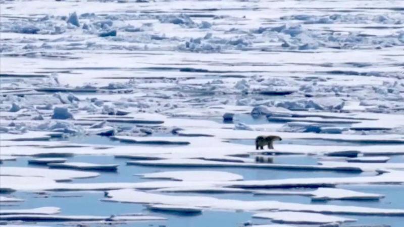 Giornata della Terra: le minacce al pianeta | Euronews