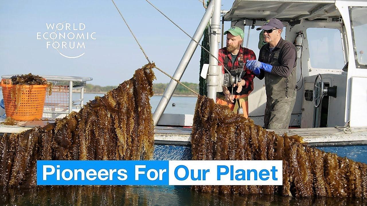 Agricoltura. Questa incredibile fattoria sottomarina può rappresentare il futuro del cibo   World Economic Forum