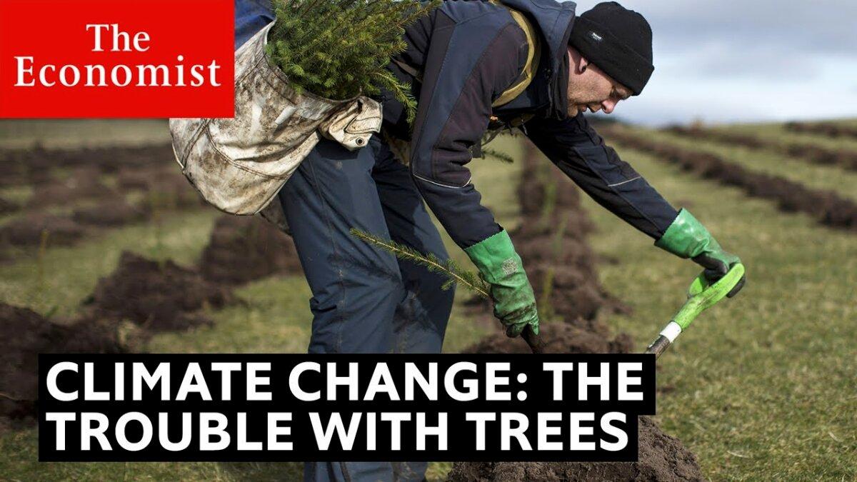 Cambiamento climatico: il problema degli alberi | The Economist