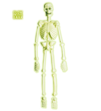 3D GID LAB SKELETONS 92cm