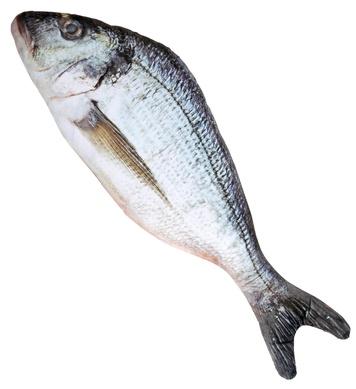 FISH 55 cm