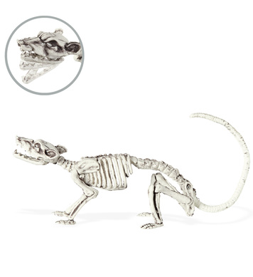 Bendable RAT SKELETON 38cm