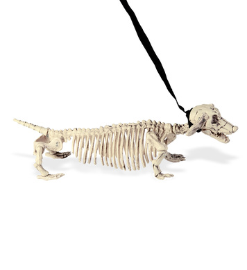 DACHSHUND SKELETON WITH LEASH 55cm