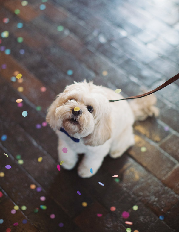 West Mill wedding venue | Derby Darley Abbey rustic industrial venue | Christmas winter wedding | Natural wedding photography Derby | Pet dog at wedding with confetti | Sasha Lee Photography