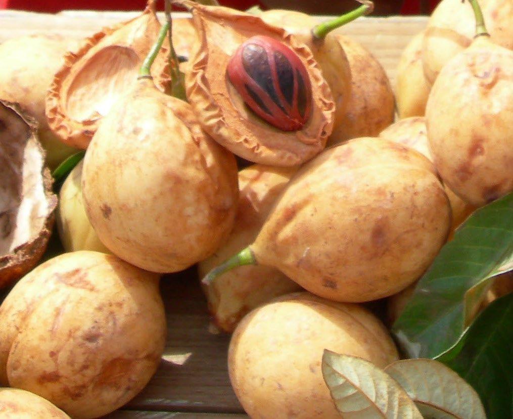 Nutmeg Fruit Cut Open