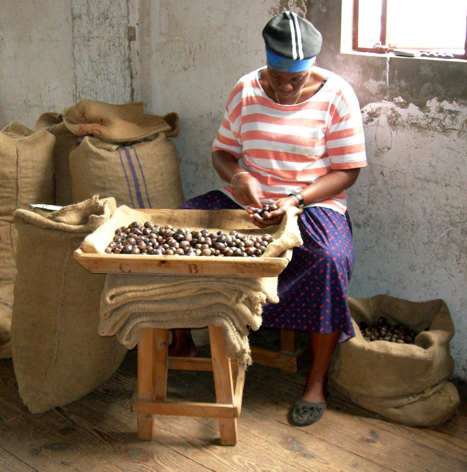 Sorting Nutmeg