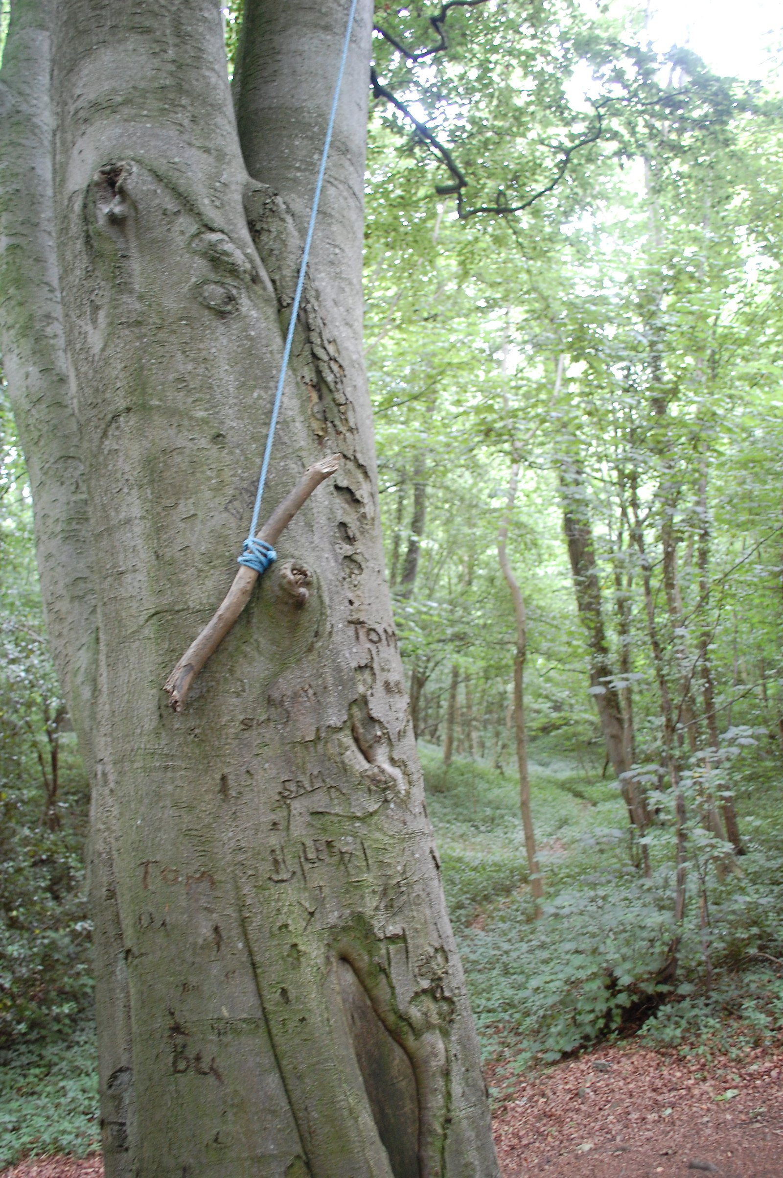 Tree Swing And Graffiti Etched Into Trees At Thornborough Northern Henge