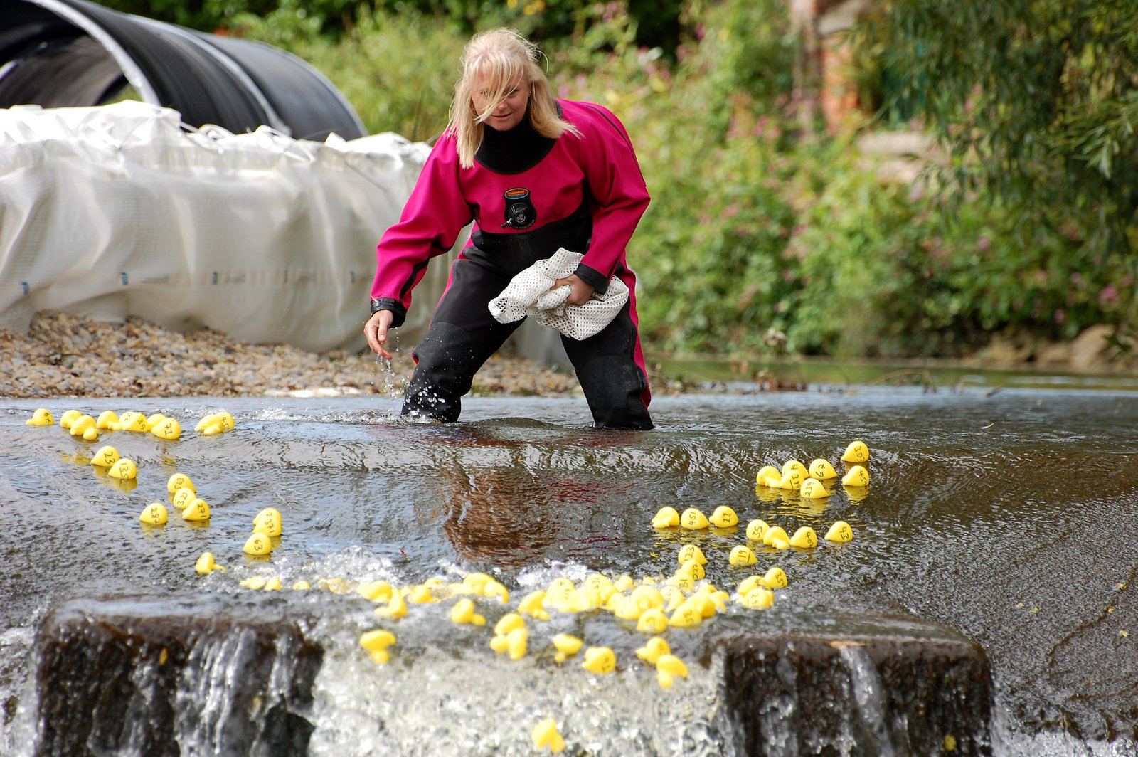 Helping The Ducks Over Alma Weir