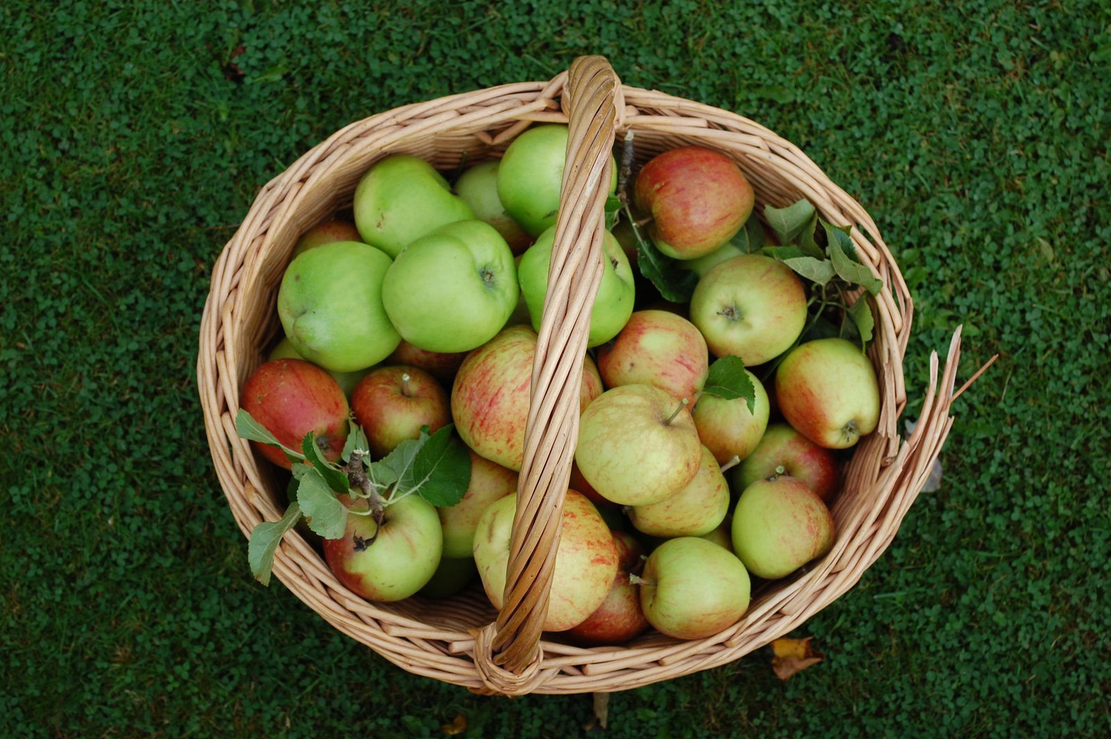 Apples Picked From the Garden