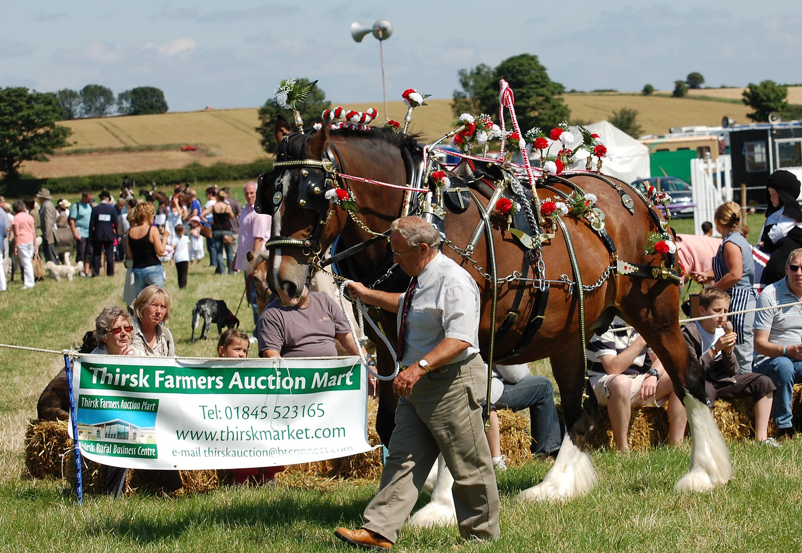 Shire Horse At Aldborough And Boroughbridge Agricultural Show