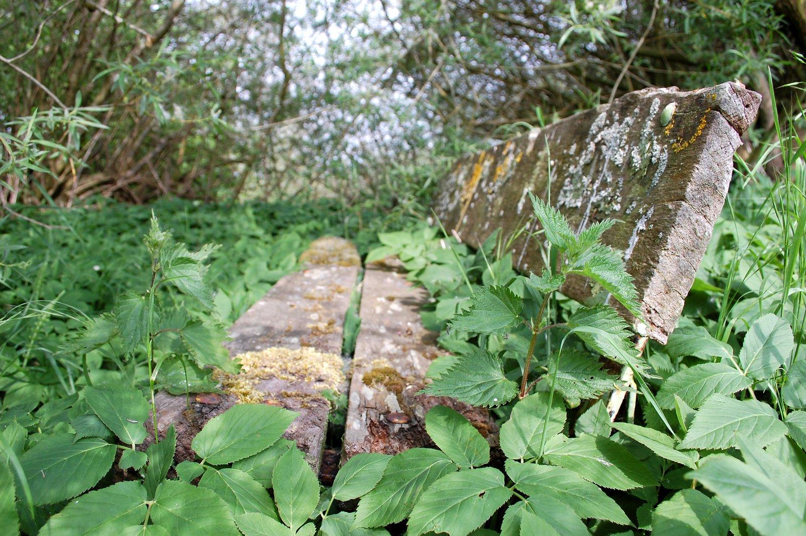Hidden Bench By River Ure
