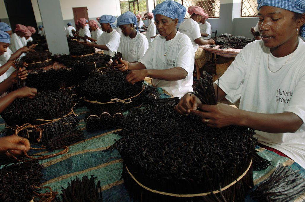 Sorting And Packing Fairtrade Vanilla