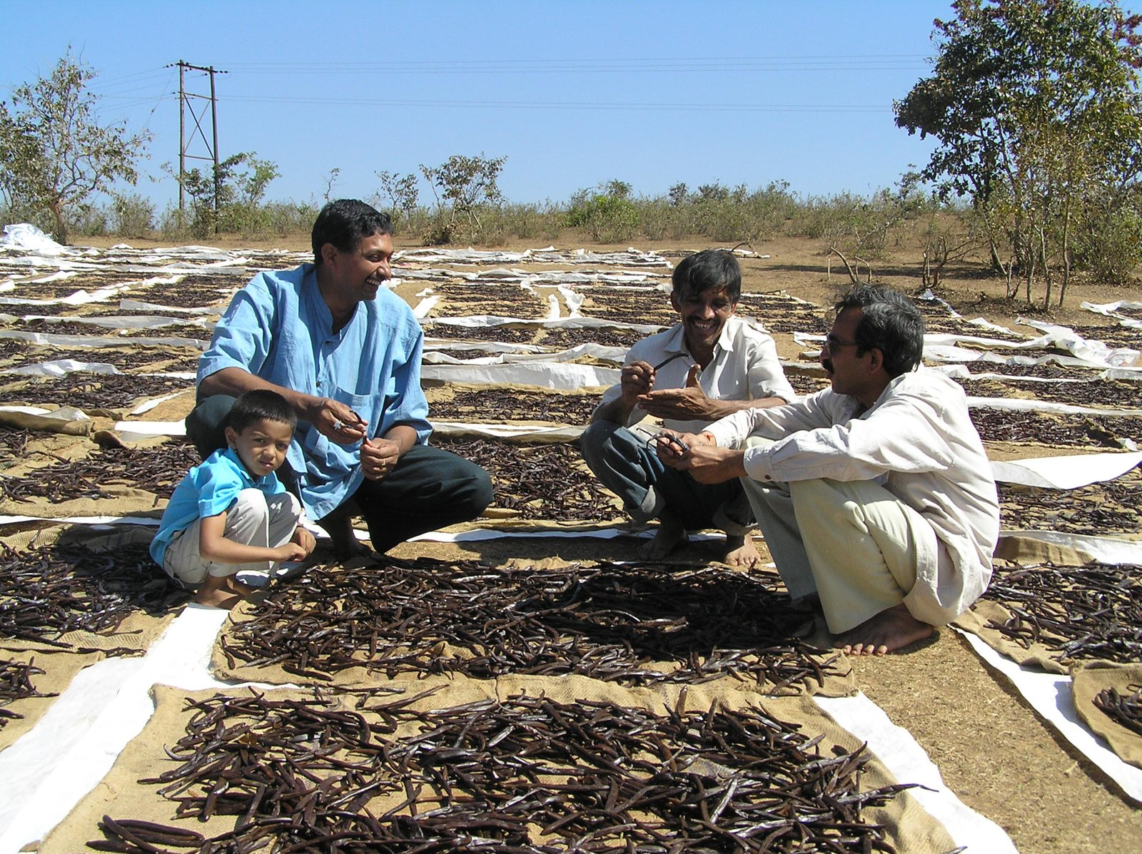 Checking On Curing Process In Karnataka In Southern India