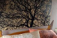 Oak-tree-in-winter