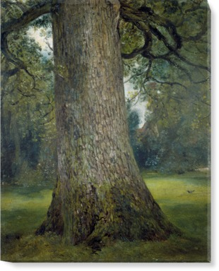 Study of Trunk of an Elm Tree