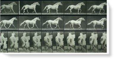 Time-lapse Photographs of a Horse Running