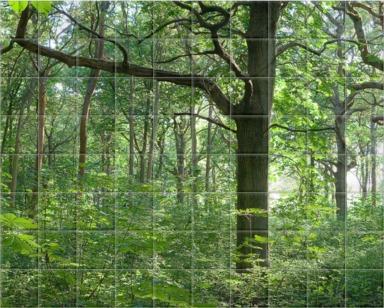 Dense Woodland I