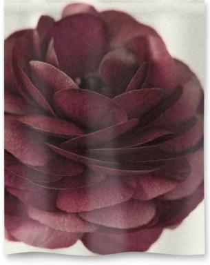 Ranunculus III