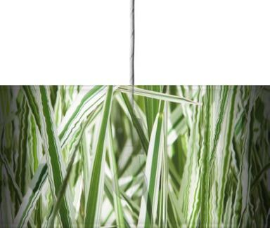 Striped Blades