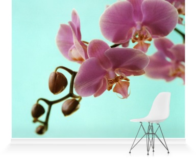 May Orchid