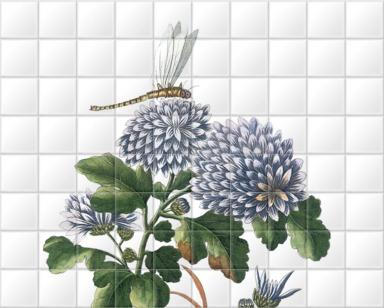 La Matricaire de la Chine à fleurs blanches et violetes