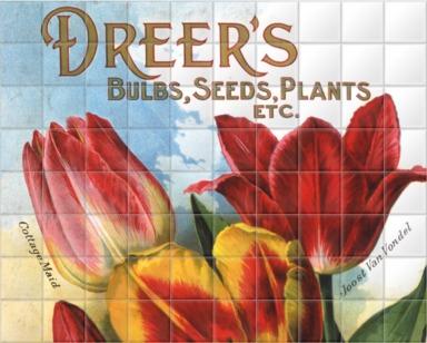 Dreer's Bulbs